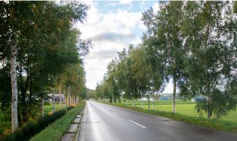 白樺並木(ロマンチック街道)
